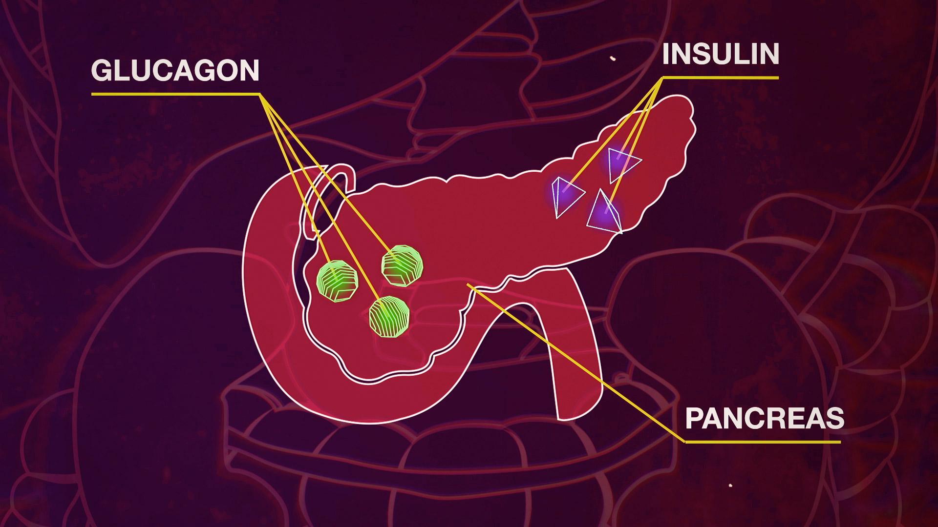 Effetti dell Insulina e del Glucagone sul metabolismo